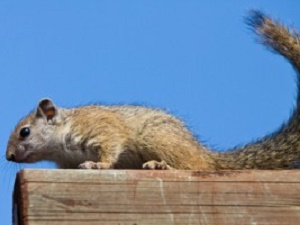 Tips to Help with Squirrels this Fall