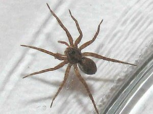 Tips to Help With Spider Control this Fall
