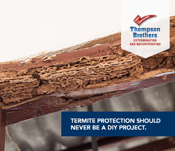 Can I get rid of termites myself?