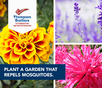 Plant a Garden to Fight Mosquitos