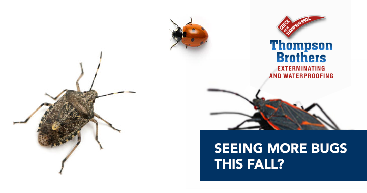 Seeing More Bugs This Fall?