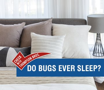 Do Bugs Sleep?