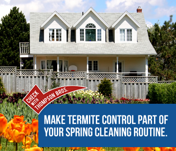Spring is the Time for Termite Control