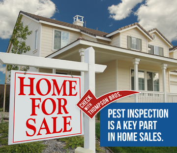 Home Buying and Pest Inspection