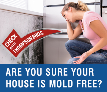 How to Spot Mold in Your Basement